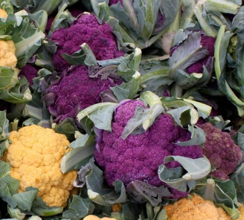 Purple Cauliflower in FM