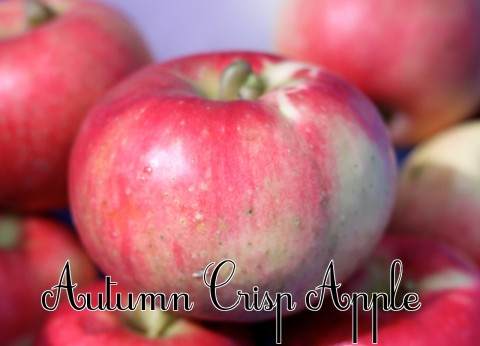 Autumn Crisp Apple