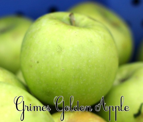 Grimes Golden Apple