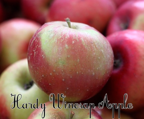 Hardy Winesap Apple