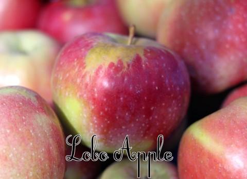 Lobo Apple