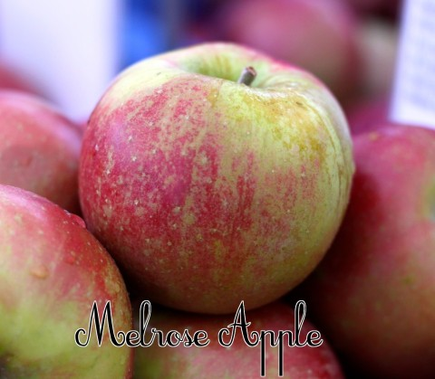 Melrose Apple