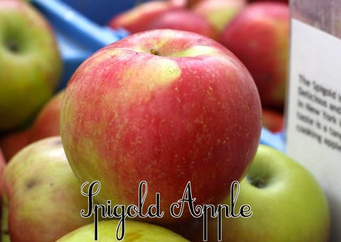 Spigold Apple