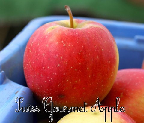 Swiss Gourmet Apple