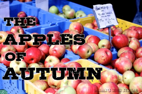 25 Different Apples to Try This Fall