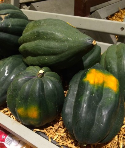 All About Winter Squash. Acorn Squash - One of the most popular in America. It's a little bland, which may be why it's used in so many recipes.