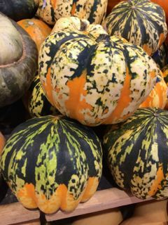 All About Winter Squash. Carnival Squash - The party animal in the squash family, these pumpkin-shaped squash are splashed with fall colors and have a sweet potato-like flavor.