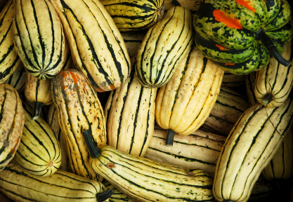 All About Winter Squash. Delicata Squash - Yellow or cream colored with dark green strips running down their oblong shape, these squash are easy to peel and are great for filling.