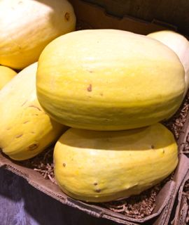 All About Winter Squash. Spaghetti Squash: Substitute this lovely yellow squash for whole-wheat spaghetti and you'll save 75-percent of the calories! Available year-round put peaks from early fall through winter.