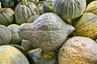 "All About Squash. Hubbard Squash - Don't let the ""wart"" covered skin keep you from trying this delicious squash in any of its color combinations (orange, blue or slate)!"