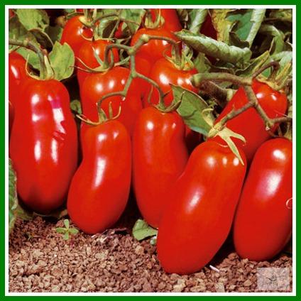 San Marzano Tomatoes via GIFT