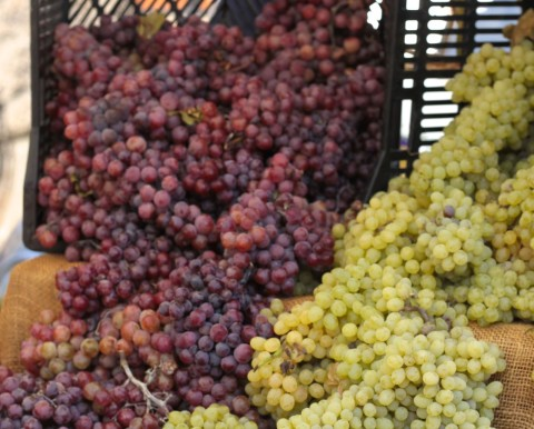 Grapes -  Top 10 Cancer Fighting Foods