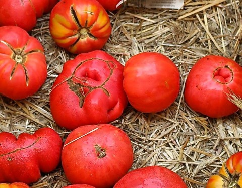 Tomatoes- Top 10 Cancer Fighting Foods