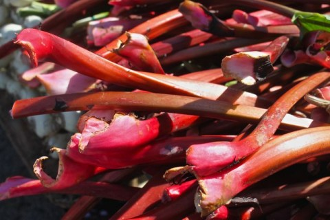 How to Pick Perfect Rhubarb